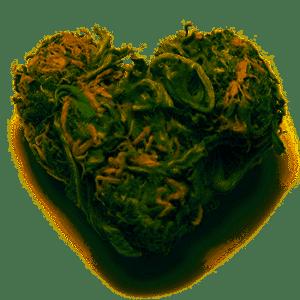 Bud Heart